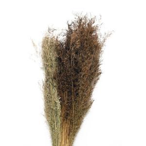 Torkade Munni grass 60-70cm 100gr/ bunt