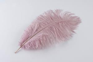 Old Pink Ostrich Plume - Feather Romance