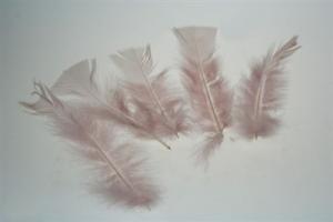 Old Pink Feathers - gammelrosa fjädrar 10 g