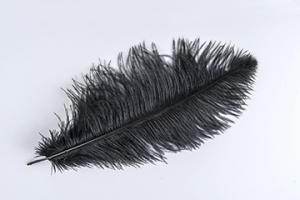 Black Ostrich Plume - Feather Romance