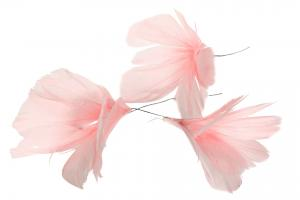 Pastel Pink Flower 12 st - Feather Romance
