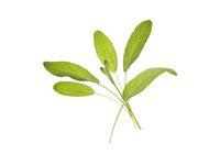 Frökapslar TREGREN Salvia 2/FP