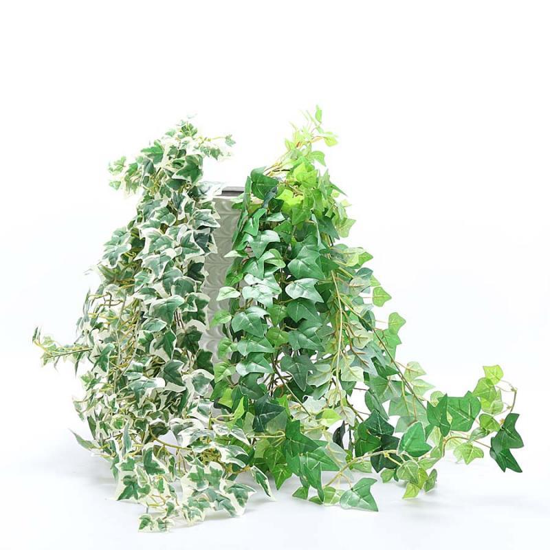 Murgröna häng