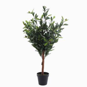 Olivträd i kruka
