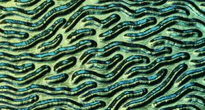 Dichroiskt fusingglas 5x10 cm. Stream med Blå Guld på svart 2 mm glas.