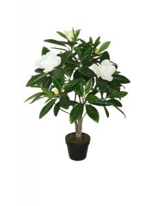 Magnolia Träd 90 cm.