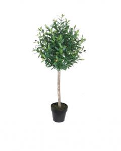 Oliv Träd 120 cm