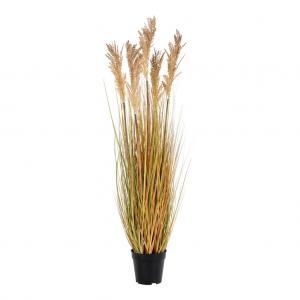 Sorghum grass