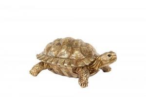 Sköldpadda guld
