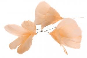 Fjäder blom ljus aprikos