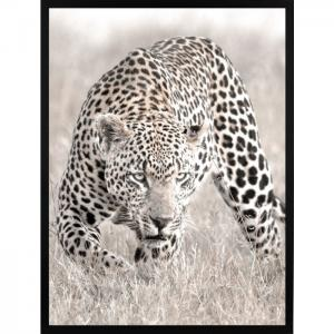 Poster 30x40 leopard