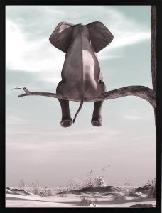 Poster 50x70 Elephant