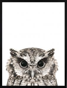 Poster 30x40 Owl