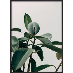 Poster 50x70 Plant
