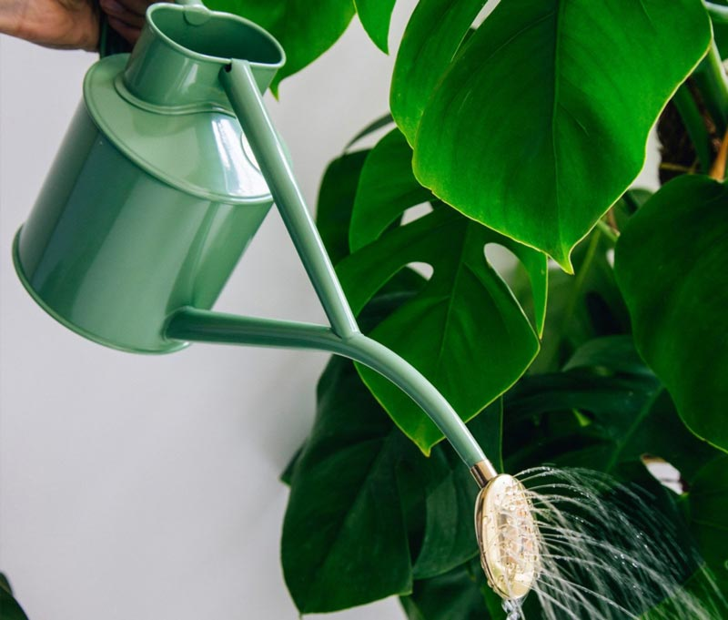 Old style water kettle indoors - Sage 1 L