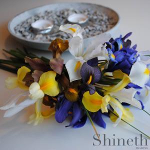 Holländsk Iris - sju olika sorters lökar (mix)