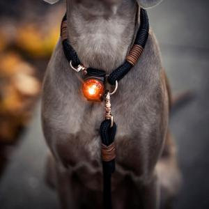 Orbiloc Dog Dual Gul