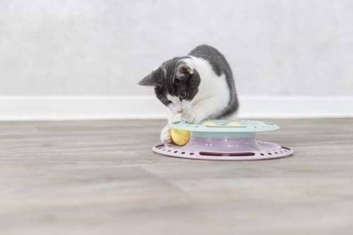 Trixie Junior Kitten Circle