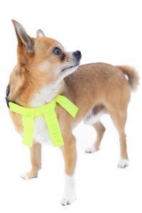 Dogman Reflexhalsband med flärpar