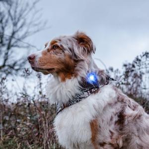 Orbiloc Dog Dual Blå