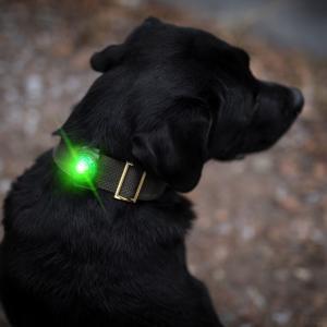 Orbiloc Dog Dual Grön