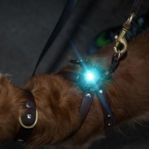 Orbiloc Dog Dual Turkos