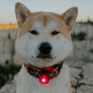 Orbiloc Dog Dual Röd