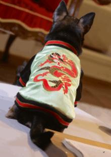 Croci vadderat hundtäcke Street Dragon