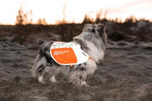 Non-Stop Dogwear Reflection Blanket