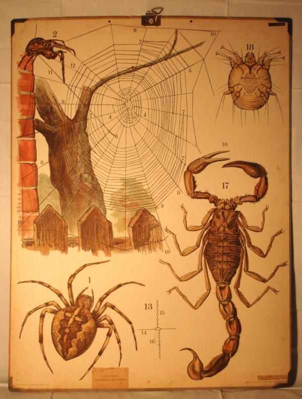 Skolplansch Skorpion