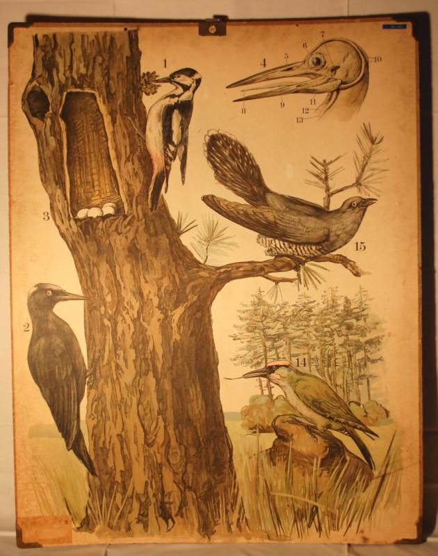 Skolplansch Fåglar