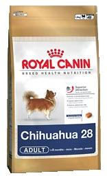 Chihuahua 28 Adult
