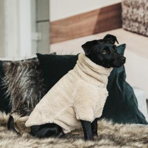 Kentucky Dog Sweater Teddy Fleece