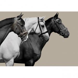 Adamsbro Canvas Tavla 3 hästar