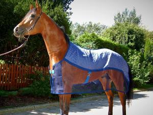 AeroChill Kyltäcke för hästar