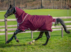 Horseware Amigo Hero Ripstop 0 g avtagbar hals