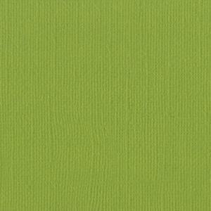 B - Canvas Parakeet