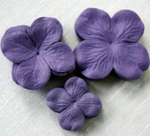 IAM - Hydrangea lila