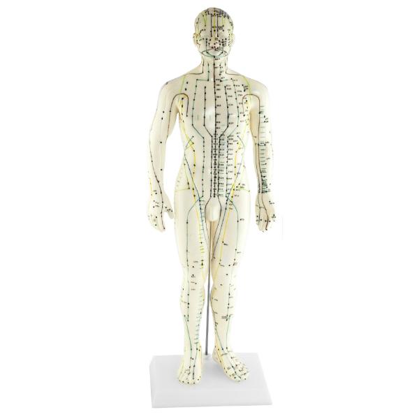 Akupunkturmodell Man
