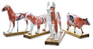 Hundmodell för akupunktur