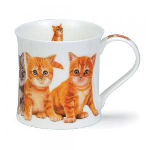 Wessex Kittens Ginger