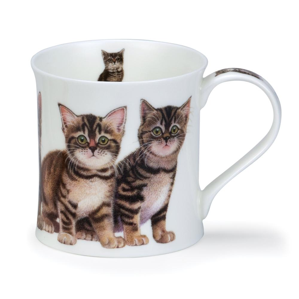 Wessex Kittens Tabby