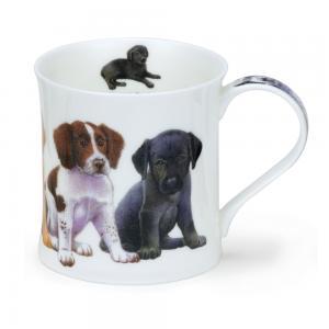 Wessex Puppies Springer Spaniel