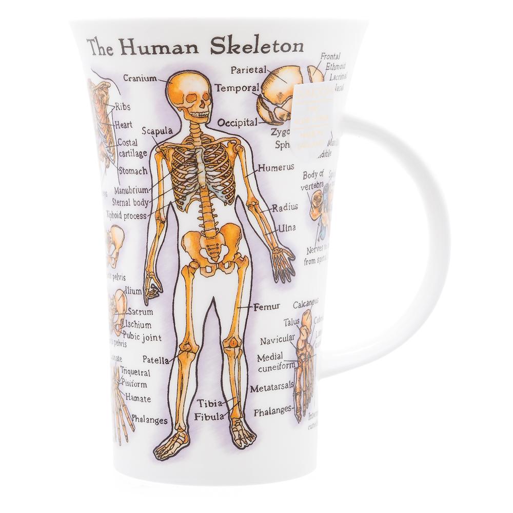 Mugg Dunoon Skelett muskler anatomy läkare sköterska sjuksköterska undersköterska present examen