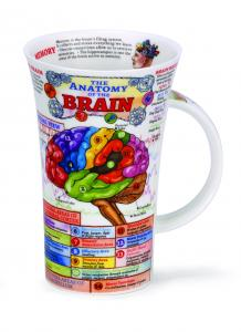 Dunoon anatomy of the brain hjärnan läkare anatomi