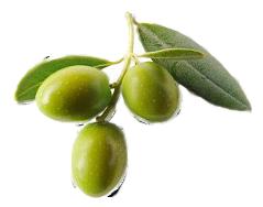 3st Gröna Oliver från Figaro om 3kg vardera billigt hos Kolonialvaror. Alltid bra pris på skafferivaror i storpack. Perfekt för catering storhushåll restaurang och café. Vi levererar till hela Sverige!