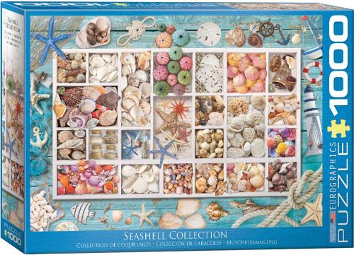 Laura's Seashell Collection