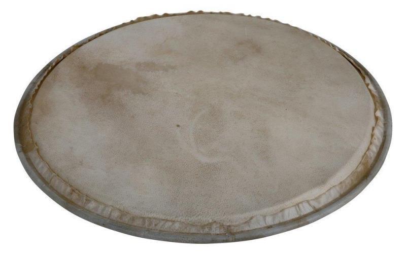 Latin Percussion Percussion head Plenera 12'', WB505C
