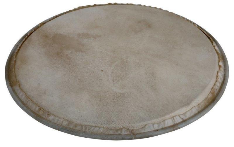 Latin Percussion Percussion head Plenera 8'', WB505A