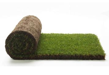 Gräsmatta på rulle, Färdigt gräs - Pris Per Kvm